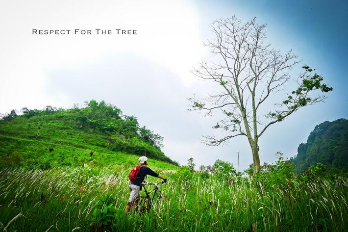 respect_tree